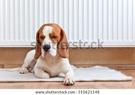 The dog has a rest on wooden floor near to a warm radiator