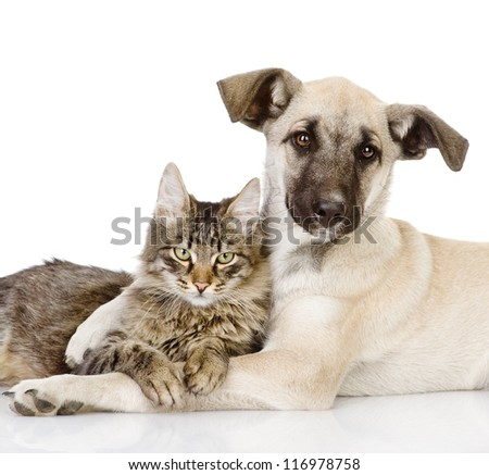 the dog hugs a cat. isolated on white background - stock photo