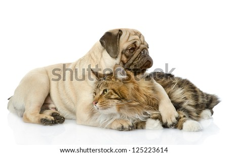 the dog hugs a cat. isolated on white background - stock photo
