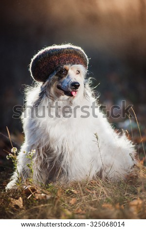 The dog in a hat sitting  on nature