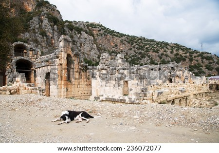 The dog in front of an ancient amphitheater in Turkey