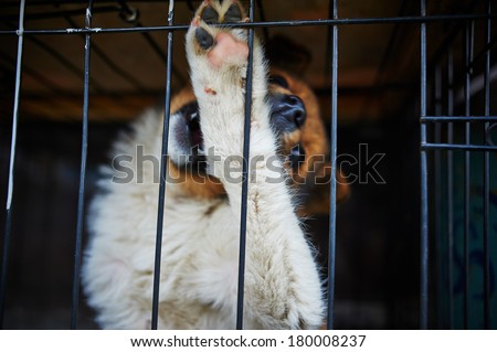 The dog in the cage