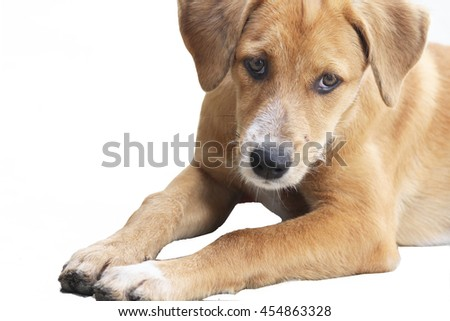 The Dog is Brown colour