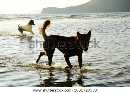 The dog is running in the water at the beach