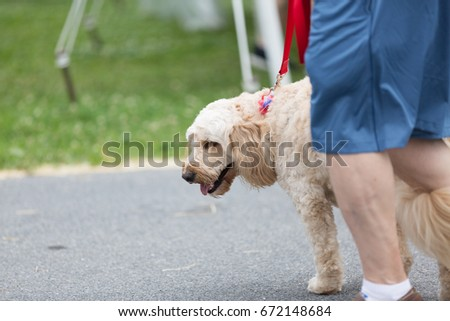 The dog is walking