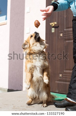 the dog jumps behind food - stock photo