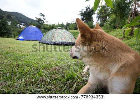 The dog looking tent for guard