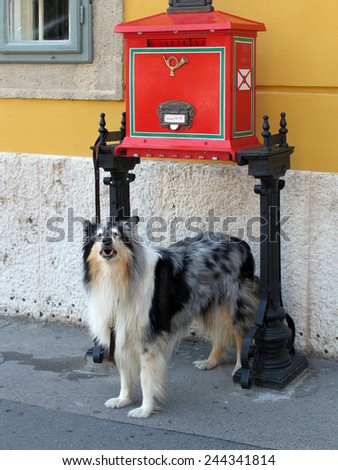 The dog on the leash at the mailbox - stock photo