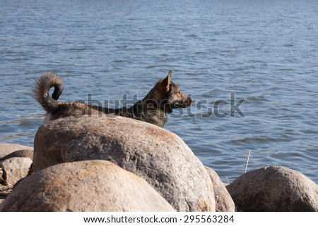 the dog peers at a water distance waiting for the owner of the fisherman ashore