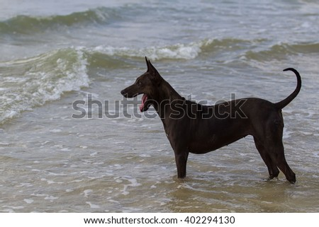 The dog running on water