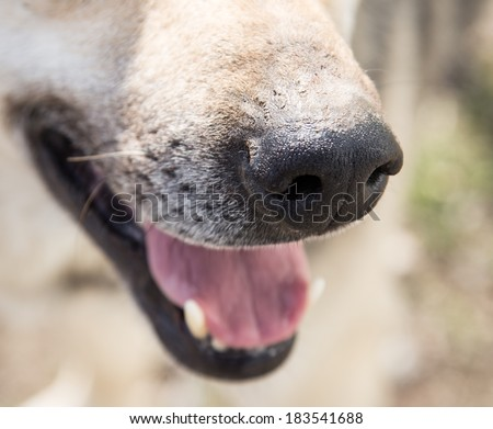 the dog's nose. macro - stock photo