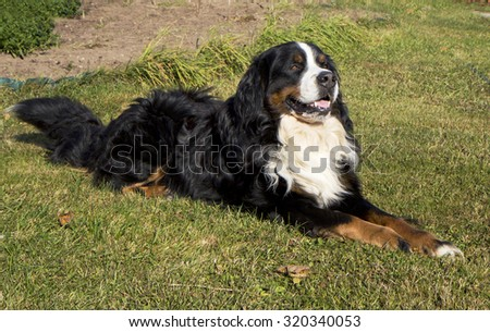 The dog sits on the grass.