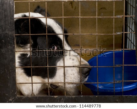 The dog  sitting in a cage. - stock photo