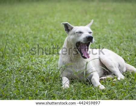 The dog sitting in grass, Thailand
