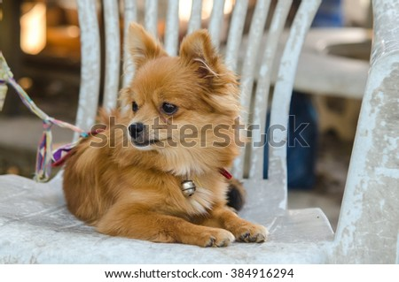 the dog sitting on an old green chair