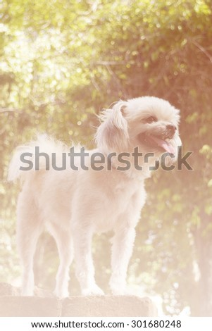 The Dog smile and green tree background with light bokeh soft focus and bright light - stock photo