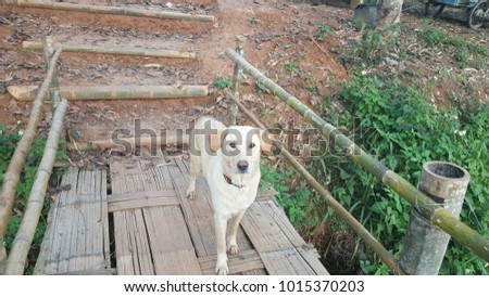 The dog standing on the old wooden bridge.