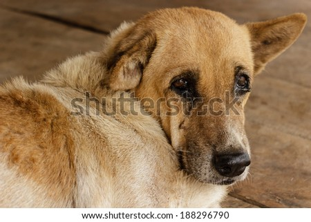 The Dog that are waiting for hope - stock photo