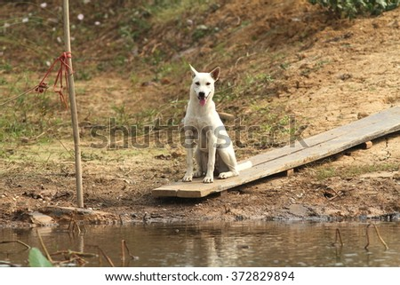 the dog waiting his owner near the river.  - stock photo