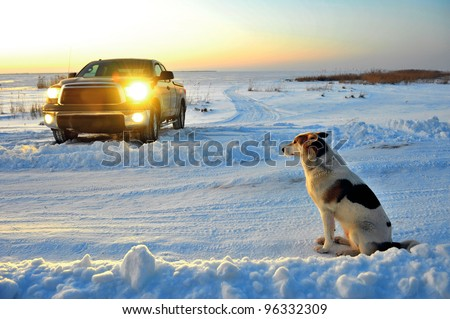 The dog waits at road. The dog waits at snow-covered road near to  truck. - stock photo