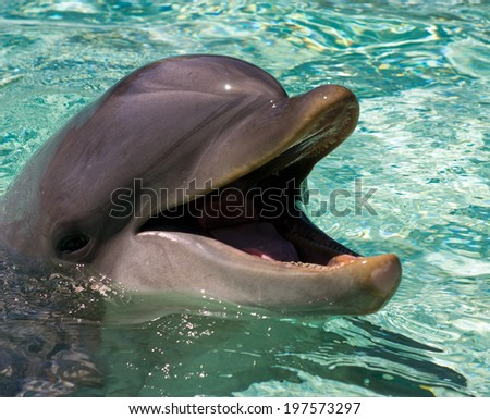 The dolphin in the water.