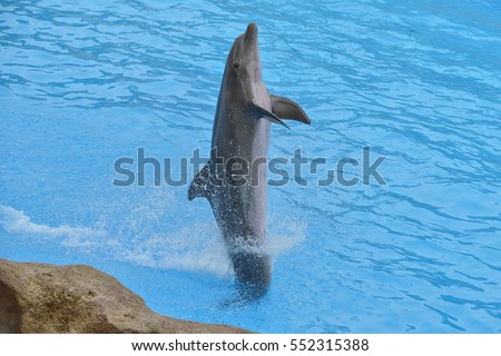 The dolphin playing in the Dolphinarium