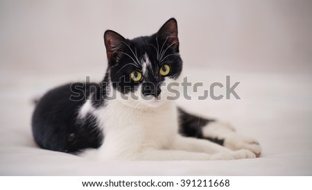 The domestic cat of a color black and white lies. - stock photo