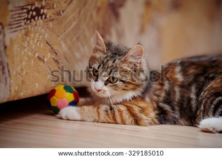 The domestic kitten of a multi-colored color plays with a ball. - stock photo