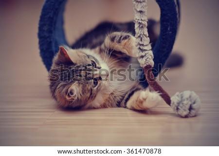 The domestic multi-colored kitten kitten plays on a floor. - stock photo
