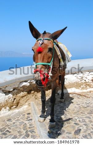 The donkey in Thira (Santorini Island - Greece) - stock photo