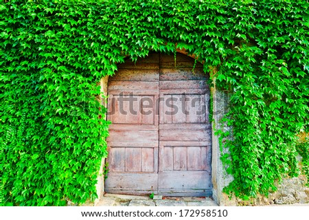 The Door of The Italian House Decorated with Wild Vine  - stock photo
