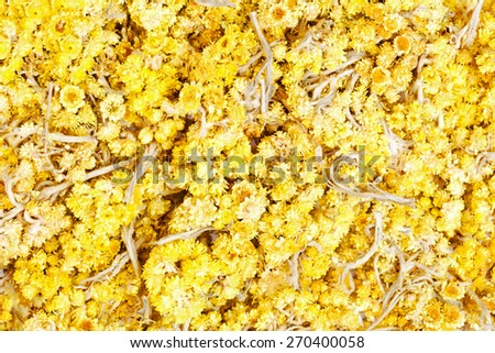 The dried flowers of helichrysum arenarium closeup. An infusion of the bright yellow flowers. - stock photo