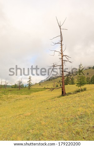 The dried up larch in mountains. A summer landscape. East Sayan mountains.