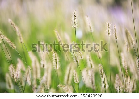 The Dry reed bending over the water. Retro style - stock photo