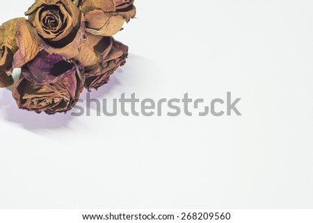 The dry rose is placed on a white background - stock photo