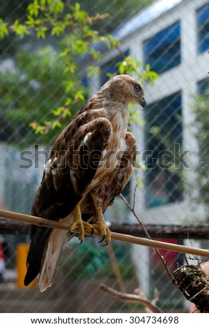 The eagle sits on a branch - stock photo