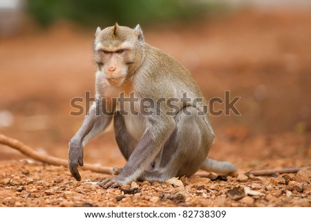 The earth brown. A monkey wild. It is removed in thailand