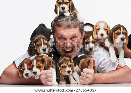 The ecstasy man and big group of a beagle puppies on white background