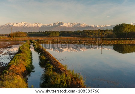 The edge of a wet rice field in central Italy with Alps in background - stock photo