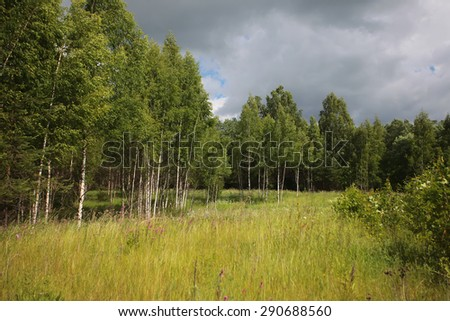 The edge of the forest - stock photo
