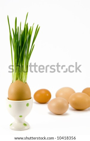 the egg  with growing grass in egg-cup among other eggs - stock photo