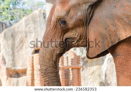 The elephant in the zoo