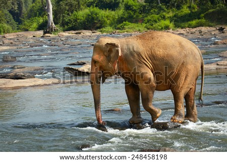 The elephant stopped to find a way through the rapid flow - stock photo