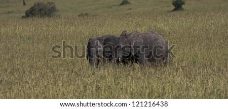 The elephants - stock photo