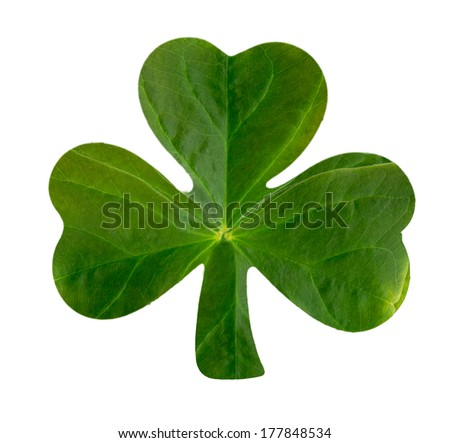 The emblematic Irish Shamrock featuring real leaf texture over white.  - stock photo