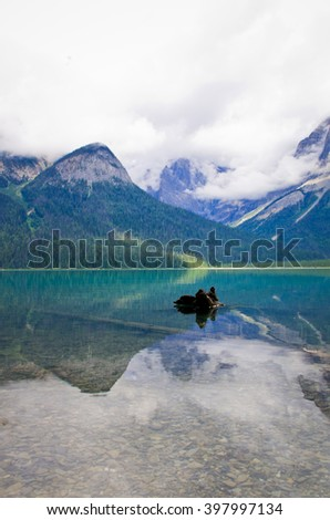 the emerald lake in Yo-ho National Park, the Canadian Rockies Mountain - stock photo