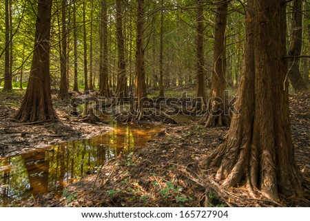 The enchanted Bald Cypress Forest at Congaree National Park - stock photo