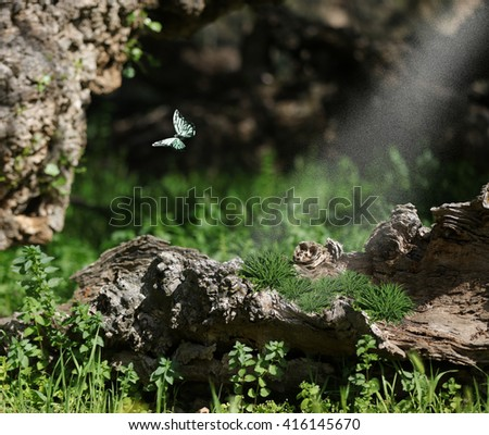 The enchanted forest.  A woodland forest with giant logs and vegetation capture a mystical scenic experience with a teal butterfly and sun sprinkles. - stock photo