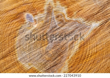 The end of birch logs (close-up) - stock photo