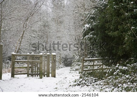 The entrance to a woodland covered in snow